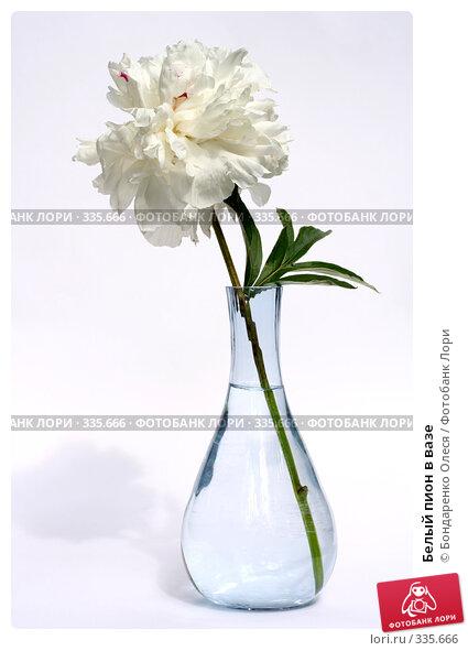 Купить «Белый пион в вазе», фото № 335666, снято 25 июня 2008 г. (c) Бондаренко Олеся / Фотобанк Лори