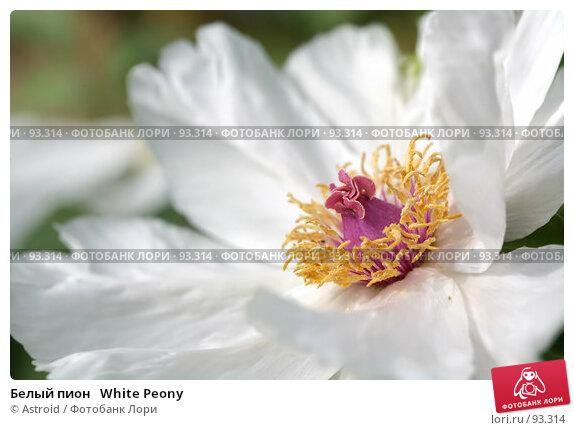 Купить «Белый пион   White Peony», фото № 93314, снято 29 мая 2007 г. (c) Astroid / Фотобанк Лори