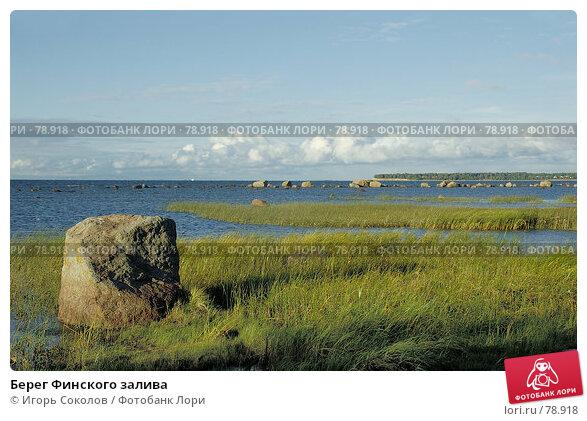 Берег Финского залива, фото № 78918, снято 20 сентября 2017 г. (c) Игорь Соколов / Фотобанк Лори