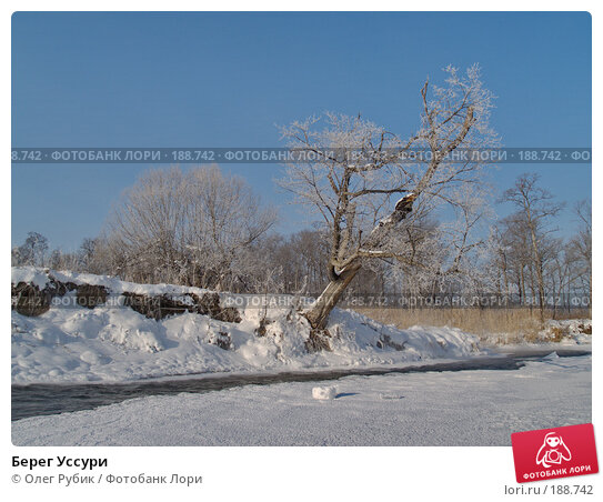 Берег Уссури, фото № 188742, снято 21 января 2008 г. (c) Олег Рубик / Фотобанк Лори