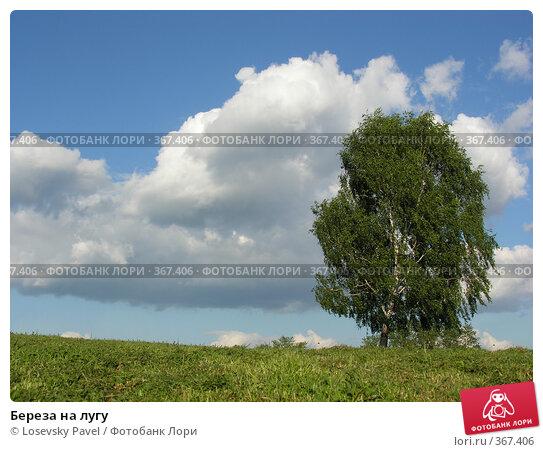 Купить «Береза на лугу», фото № 367406, снято 2 июля 2006 г. (c) Losevsky Pavel / Фотобанк Лори