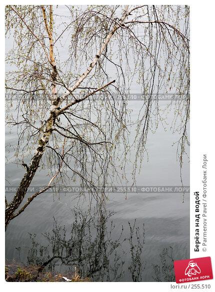 Берёза над водой, фото № 255510, снято 16 апреля 2008 г. (c) Parmenov Pavel / Фотобанк Лори