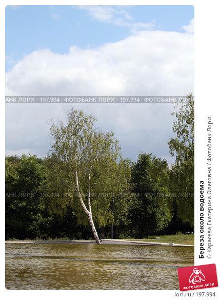Береза около водоема, фото № 197994, снято 20 августа 2017 г. (c) Карасева Екатерина Олеговна / Фотобанк Лори