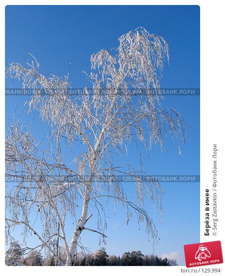 Купить «Берёза в инее», фото № 129994, снято 18 декабря 2005 г. (c) Serg Zastavkin / Фотобанк Лори