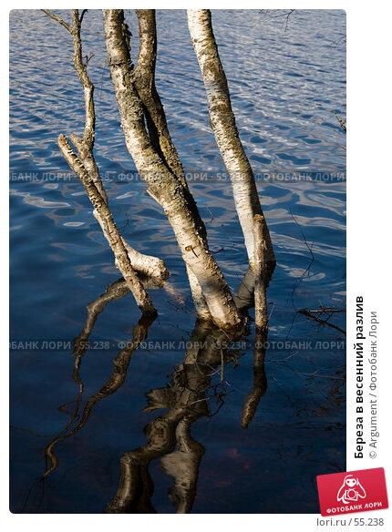 Береза в весенний разлив, фото № 55238, снято 1 мая 2007 г. (c) Argument / Фотобанк Лори