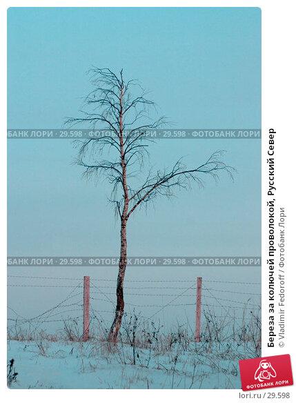 Береза за колючей проволокой, Русский Север, фото № 29598, снято 28 марта 2017 г. (c) Vladimir Fedoroff / Фотобанк Лори
