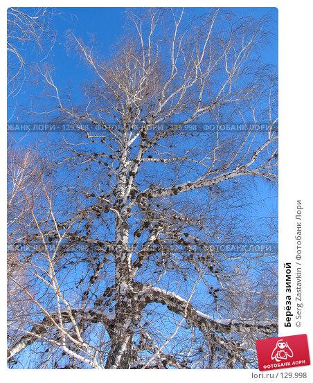 Берёза зимой, фото № 129998, снято 21 декабря 2005 г. (c) Serg Zastavkin / Фотобанк Лори