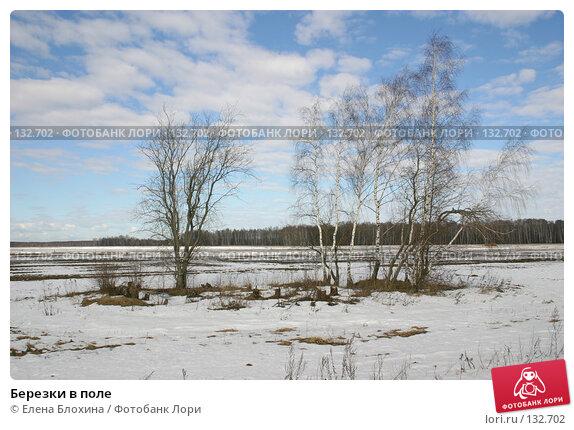 Березки в поле, фото № 132702, снято 16 марта 2007 г. (c) Елена Блохина / Фотобанк Лори