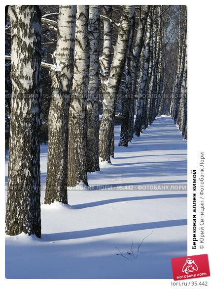 Березовая аллея зимой, фото № 95442, снято 26 января 2007 г. (c) Юрий Синицын / Фотобанк Лори