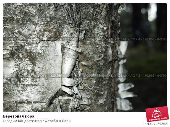 Березовая кора, фото № 180966, снято 11 декабря 2016 г. (c) Вадим Кондратенков / Фотобанк Лори