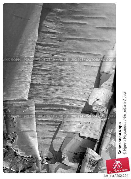 Березовая кора, фото № 202294, снято 16 мая 2007 г. (c) Ирина Игумнова / Фотобанк Лори