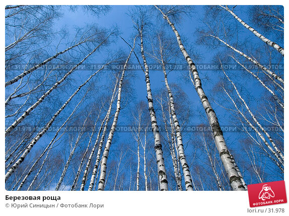 Купить «Березовая роща», фото № 31978, снято 30 марта 2007 г. (c) Юрий Синицын / Фотобанк Лори