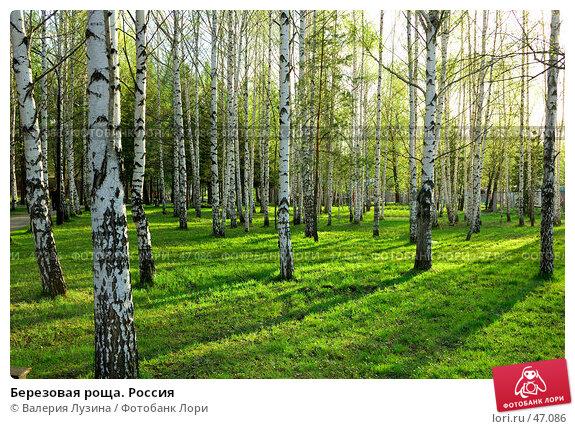 Березовая роща. Россия, фото № 47086, снято 20 мая 2007 г. (c) Валерия Потапова / Фотобанк Лори