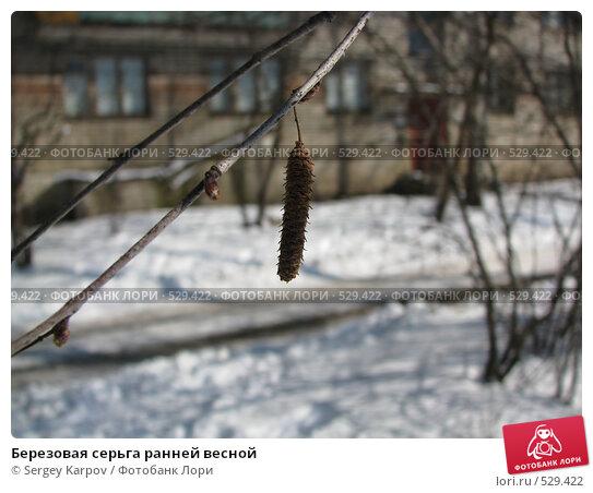 Березовая серьга ранней весной. Стоковое фото, фотограф Sergey Karpov / Фотобанк Лори