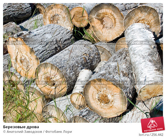 Березовые дрова, фото № 256442, снято 3 августа 2006 г. (c) Анатолий Заводсков / Фотобанк Лори