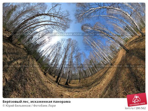 Берёзовый лес, искаженная панорама, фото № 280562, снято 4 мая 2008 г. (c) Юрий Бельмесов / Фотобанк Лори