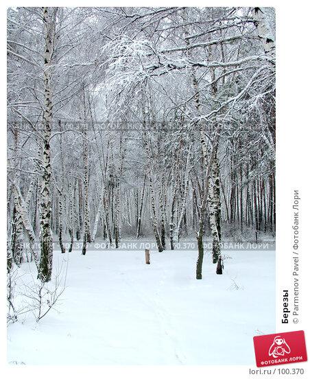 Березы, фото № 100370, снято 15 февраля 2007 г. (c) Parmenov Pavel / Фотобанк Лори