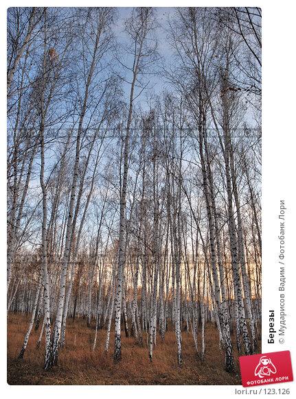 Березы, фото № 123126, снято 21 октября 2007 г. (c) Мударисов Вадим / Фотобанк Лори