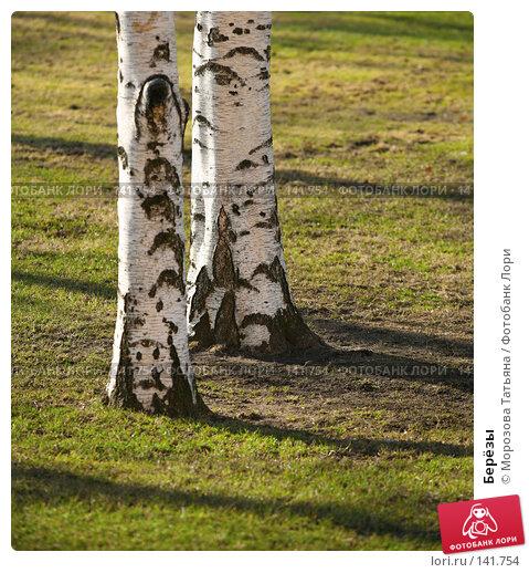 Купить «Берёзы», фото № 141754, снято 24 марта 2007 г. (c) Морозова Татьяна / Фотобанк Лори