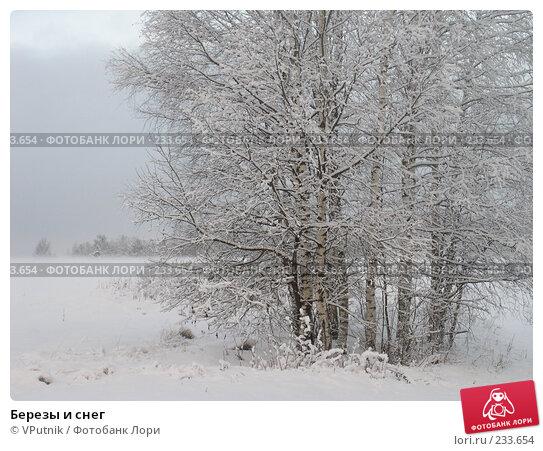 Березы и снег, фото № 233654, снято 23 апреля 2017 г. (c) VPutnik / Фотобанк Лори