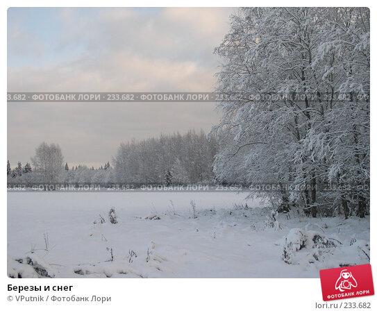 Купить «Березы и снег», фото № 233682, снято 18 марта 2018 г. (c) VPutnik / Фотобанк Лори