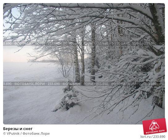 Березы и снег, фото № 233690, снято 26 февраля 2017 г. (c) VPutnik / Фотобанк Лори