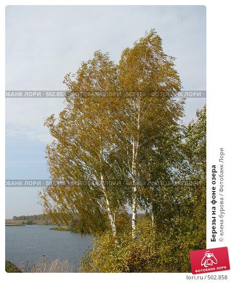Купить «Березы на фоне озера», фото № 502858, снято 4 октября 2008 г. (c) елена бурова / Фотобанк Лори