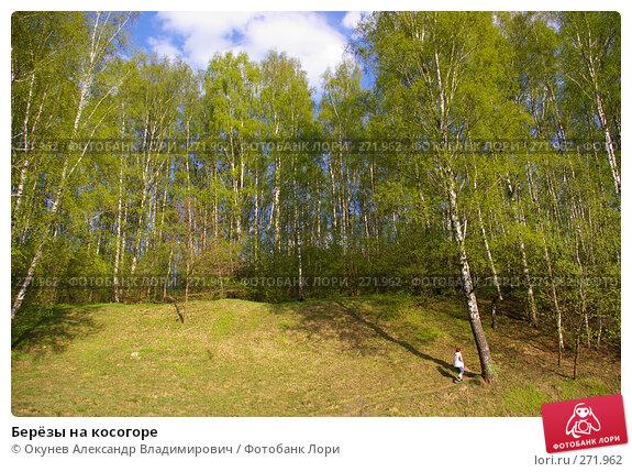 Берёзы на косогоре, фото № 271962, снято 2 мая 2008 г. (c) Окунев Александр Владимирович / Фотобанк Лори