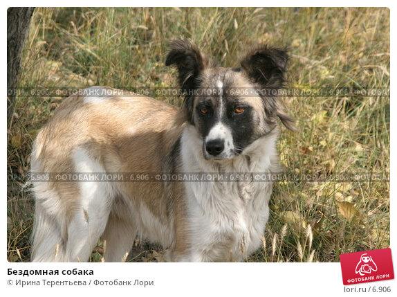 Купить «Бездомная собака», эксклюзивное фото № 6906, снято 27 сентября 2005 г. (c) Ирина Терентьева / Фотобанк Лори