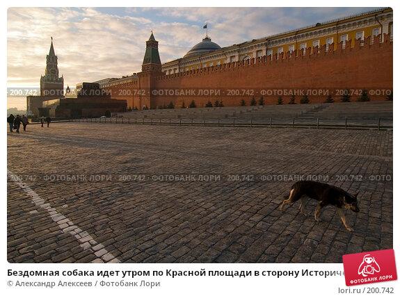 Бездомная собака идет утром по Красной площади в сторону Исторического музея.  Москва, эксклюзивное фото № 200742, снято 11 февраля 2008 г. (c) Александр Алексеев / Фотобанк Лори