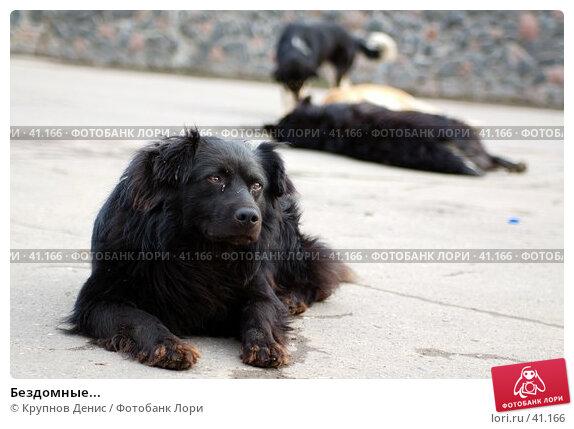 Бездомные..., фото № 41166, снято 7 апреля 2007 г. (c) Крупнов Денис / Фотобанк Лори
