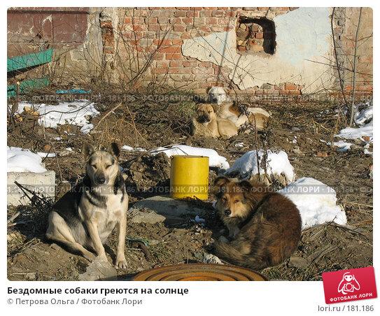 Бездомные собаки греются на солнце, фото № 181186, снято 2 января 2008 г. (c) Петрова Ольга / Фотобанк Лори