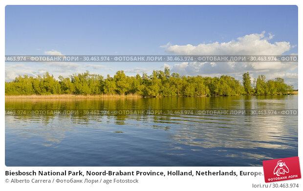Biesbosch National Park, Noord-Brabant Province, Holland, Netherlands, Europe. Стоковое фото, фотограф Alberto Carrera / age Fotostock / Фотобанк Лори
