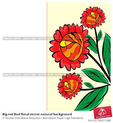 Big red Bud floral vector natural background. Стоковое фото, фотограф Zoonar.com/Elena Kozyreva / age Fotostock / Фотобанк Лори