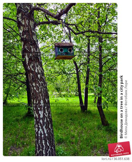 Birdhouse on a tree in a city park. Редакционное фото, фотограф Мила Демидова / Фотобанк Лори