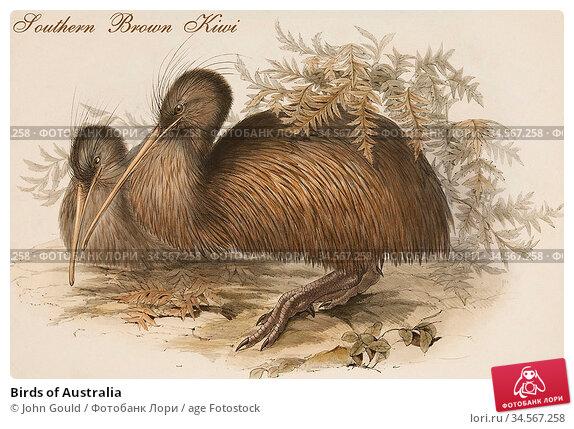 Birds of Australia. Стоковое фото, фотограф John Gould / age Fotostock / Фотобанк Лори