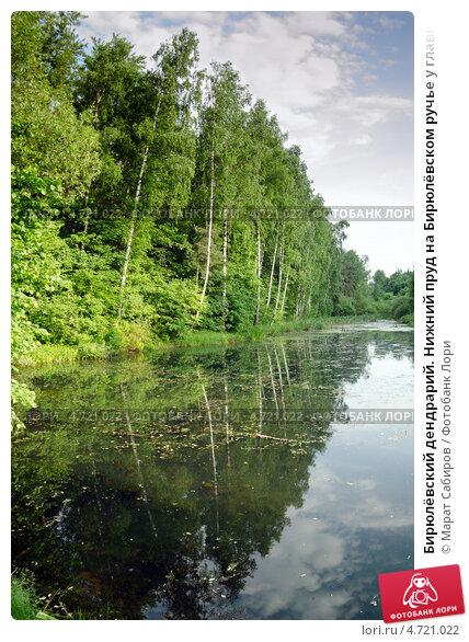 Купить «Бирюлёвский дендрарий. Нижний пруд на Бирюлёвском ручье у главного входа в парк.», фото № 4721022, снято 1 июня 2013 г. (c) Марат Сабиров / Фотобанк Лори