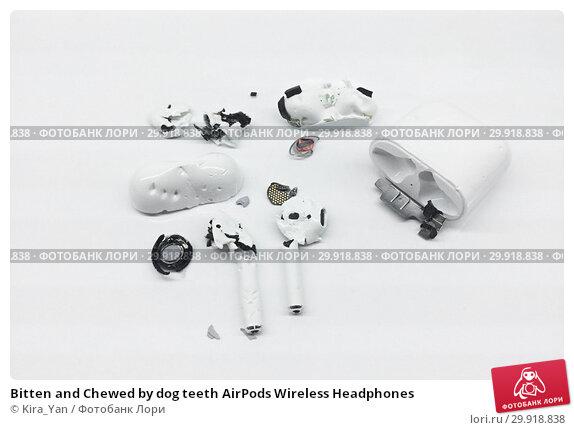 Купить «Bitten and Chewed by dog teeth AirPods Wireless Headphones», фото № 29918838, снято 7 февраля 2019 г. (c) Kira_Yan / Фотобанк Лори