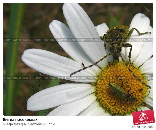 Битва насекомых, фото № 100902, снято 5 июля 2005 г. (c) Карелин Д.А. / Фотобанк Лори