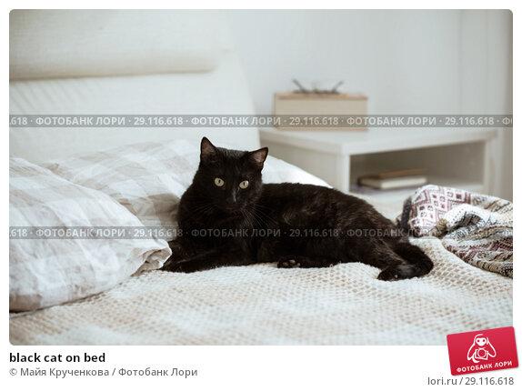 Купить «black cat on bed», фото № 29116618, снято 18 сентября 2018 г. (c) Майя Крученкова / Фотобанк Лори