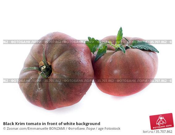 Black Krim tomato in front of white background. Стоковое фото, фотограф Zoonar.com/Emmanuelle BONZAMI / age Fotostock / Фотобанк Лори