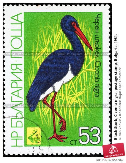 Black Stork, Ciconia nigra, postage stamp, Bulgaria, 1981. (2014 год). Редакционное фото, фотограф Ivan Vdovin / age Fotostock / Фотобанк Лори