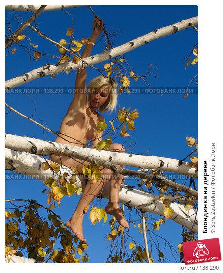 Блондинка на дереве, фото № 138290, снято 18 сентября 2005 г. (c) Serg Zastavkin / Фотобанк Лори