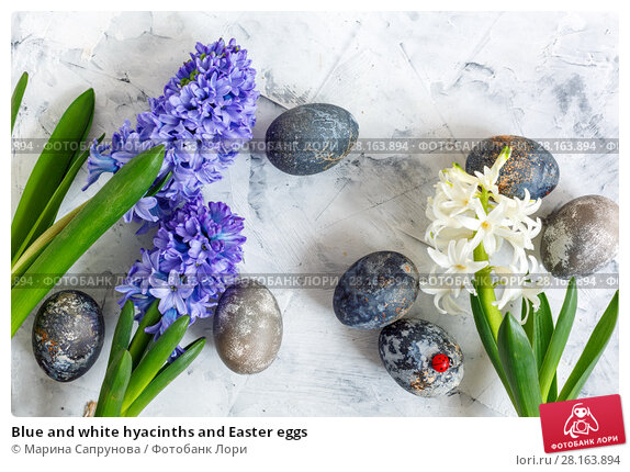 Купить «Blue and white hyacinths and Easter eggs», фото № 28163894, снято 12 марта 2018 г. (c) Марина Сапрунова / Фотобанк Лори