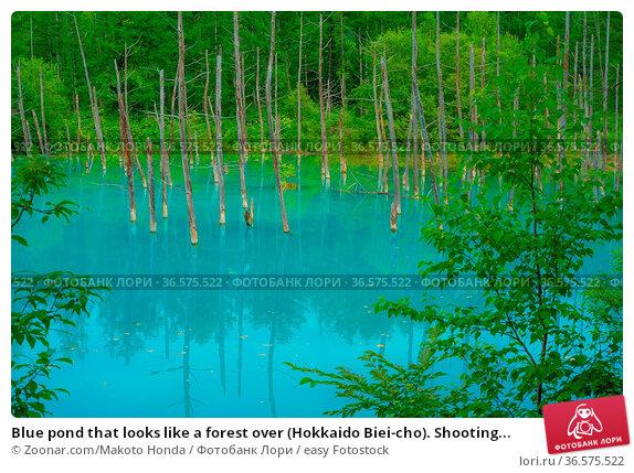 Blue pond that looks like a forest over (Hokkaido Biei-cho). Shooting... Стоковое фото, фотограф Zoonar.com/Makoto Honda / easy Fotostock / Фотобанк Лори