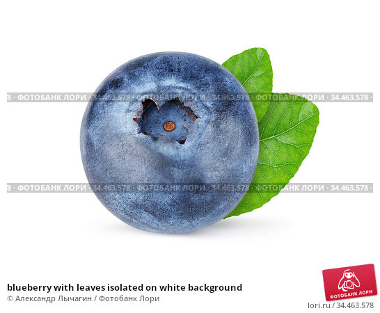 blueberry with leaves isolated on white background. Стоковое фото, фотограф Александр Лычагин / Фотобанк Лори