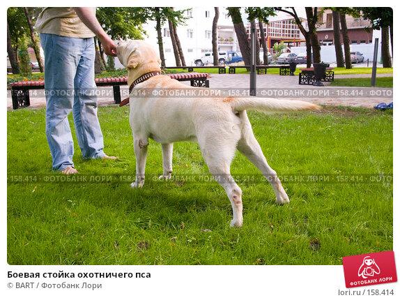 Боевая стойка охотничего пса, фото № 158414, снято 12 июня 2007 г. (c) BART / Фотобанк Лори