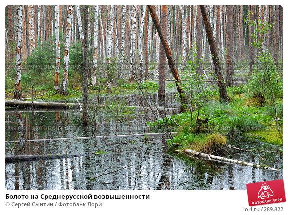 Болото на Среднерусской возвышенности, фото № 289822, снято 30 июня 2007 г. (c) Сергей Сынтин / Фотобанк Лори