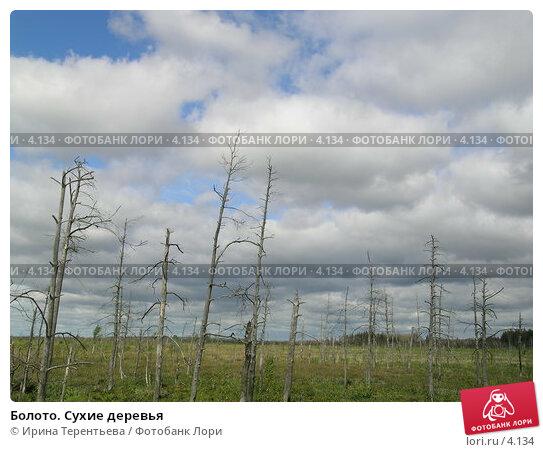 Болото. Сухие деревья, эксклюзивное фото № 4134, снято 21 августа 2004 г. (c) Ирина Терентьева / Фотобанк Лори
