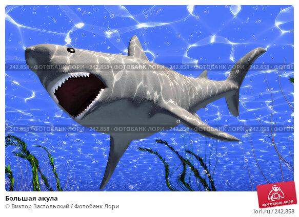 Купить «Большая акула», иллюстрация № 242858 (c) Виктор Застольский / Фотобанк Лори